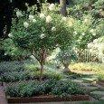 Фото штамбовой гортензии в саду