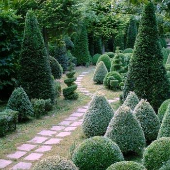 Фото топиариев в саду