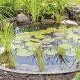 Мини-водоем в саду