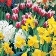 Подбор луковичных цветов
