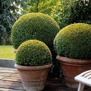Растения в кадках